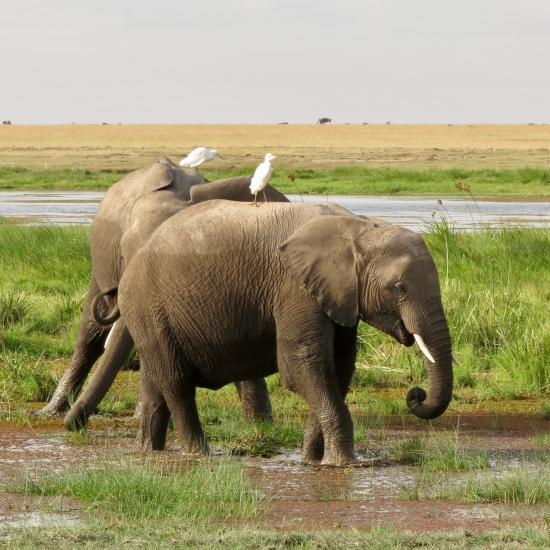 Travel Kenya, Amboseli National Park ...