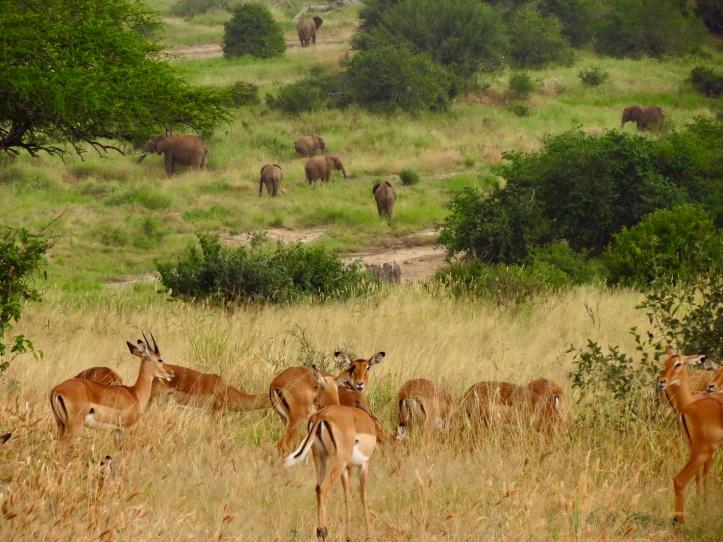 Travel Tanzania, Tarangire National Park ...