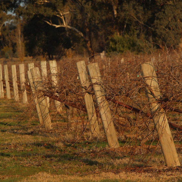 Jones Winery Rutherglen