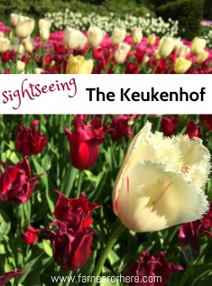 The Kuekenhof is a seasonal garden in the heart of the Netherlands, a stone's throw from Amsterdam, that is one of Europe's most beautiful sumer tourist destinations.
