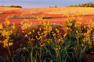 The Australian Garden, Mornington Peninsula