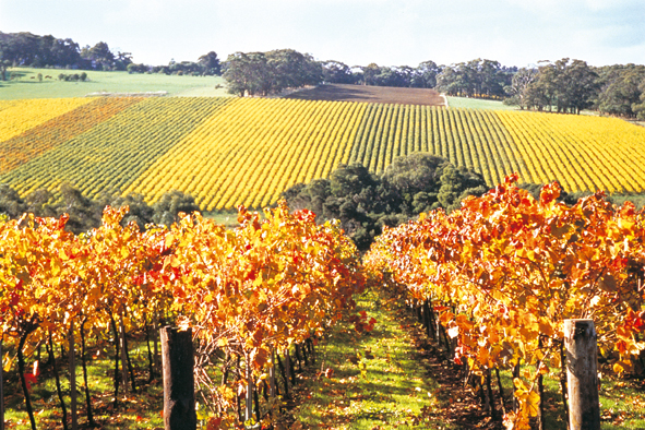 Mornington Peninsula wine country.